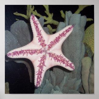 Pink Starfish Poster