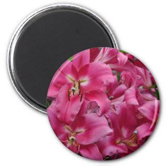 Pink stargazer lilies magnet