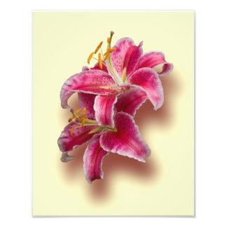 Pink Stargazer Lilies Photo