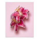 Pink Stargazer Lilies Photograph