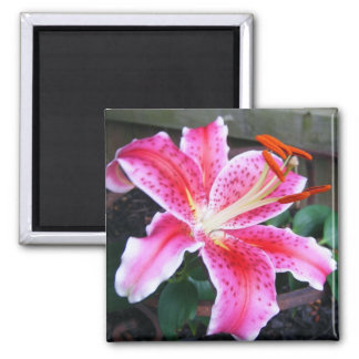 Pink Stargazer Lily 2 Inch Square Magnet