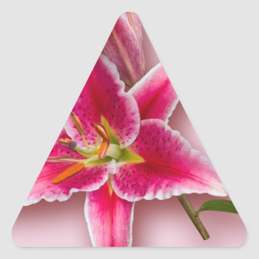 Pink Stargazer Lily and Bud Stickers