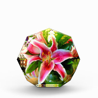 pink stargazer lily award
