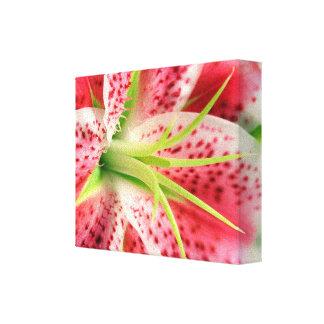 Pink Stargazer Lily Canvas Wrap Canvas Print