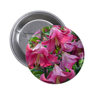 Pink stargazer lily flowers button