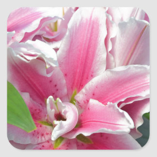 Pink stargazer lily flowers in spring square sticker