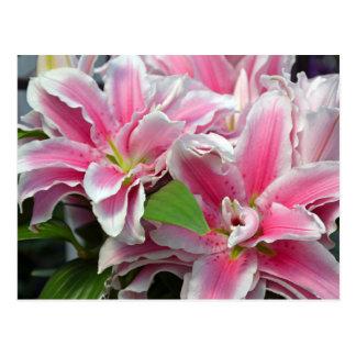 Pink stargazer lily flowers postcard
