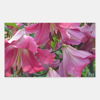 Pink stargazer lily flowers rectangular sticker