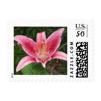 Pink Stargazer Postage Stamps