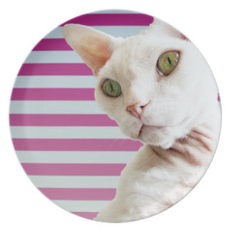 Pink Stripe White Devon Rex Cat Plate