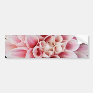 pink striped dahlia bumper sticker