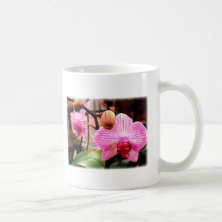 Pink Striped Phalaenopsis Orchid Classic White Coffee Mug
