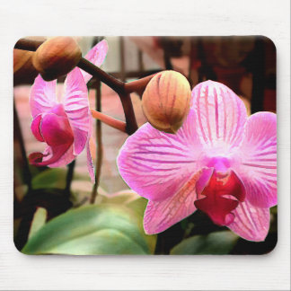 Pink Striped Phalaenopsis Orchid Mouse Pad