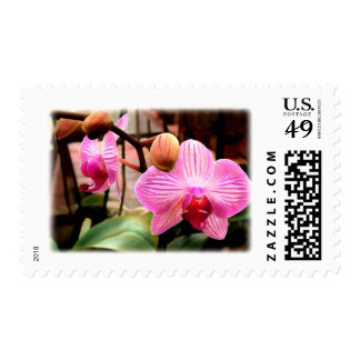 Pink Striped Phalaenopsis Orchid Postage