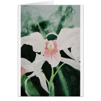 pink stripped cattleya orchids greeting card