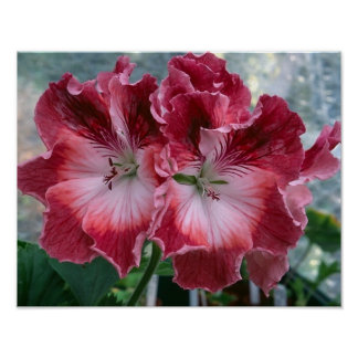 Pink Summer Flowers Photo Nature Wall Poster