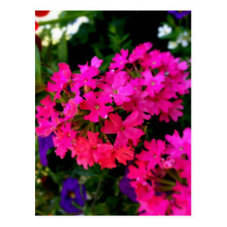Pink Summer Flowers Photo on various products Postcard