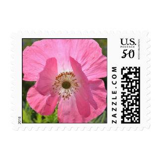 Pink Summer Iceland Poppy Postage