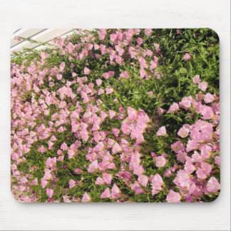 pink  sundrops mouse pad