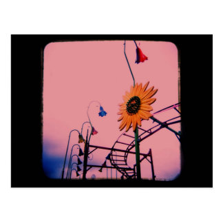 Pink Sunflower Post Cards