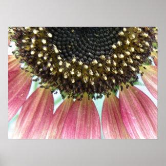 Pink Sunflower Print