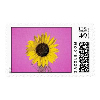 Pink Sunflower Stamp