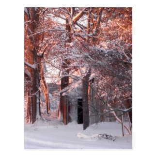 Pink Sunrise on the Snow Winter Photo Post Card