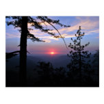 Pink sunset with pine trees and clouds postcard