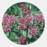 Pink Swamp Milkweed (Asclepias Incarnata) flowers Classic Round Sticker
