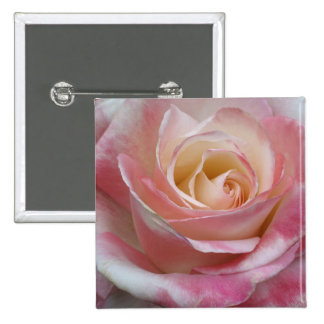 Pink Sweetheart Rose Button
