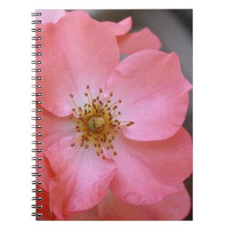 Pink Tea Rose flower Notebook
