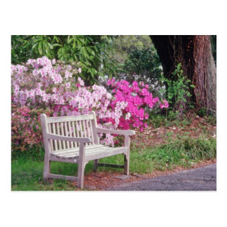 Pink The garden bench flowers Postcard