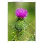 Pink thistle flower blank greetings card
