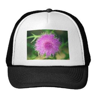 Pink Thistle Flower Mesh Hat