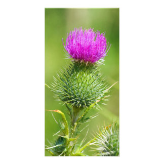 Pink thistle flower photo card