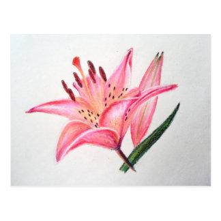 Pink Tiger Lily - Oil pastel print Postcards