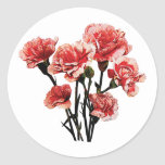 Pink-Tipped Carnations Sticker
