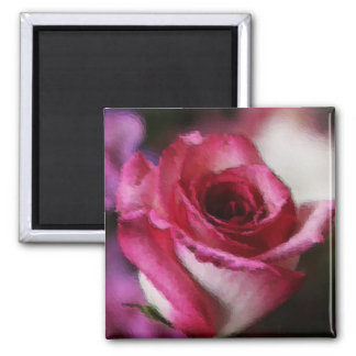 Pink Tipped Rose 2 Inch Square Magnet