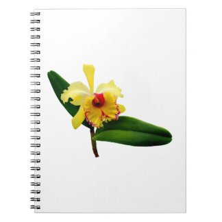 Pink Tipped Yellow Orchid Notebook