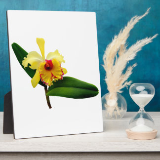 Pink Tipped Yellow Orchid Plaque
