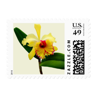 Pink Tipped Yellow Orchid Postage