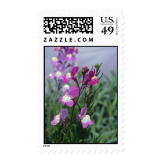Pink Toadflax (Linaria Maroccana) flowers Postage Stamp