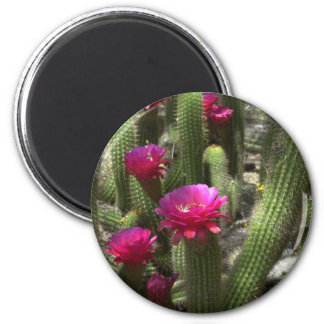 Pink Torch Cactus 2 Inch Round Magnet