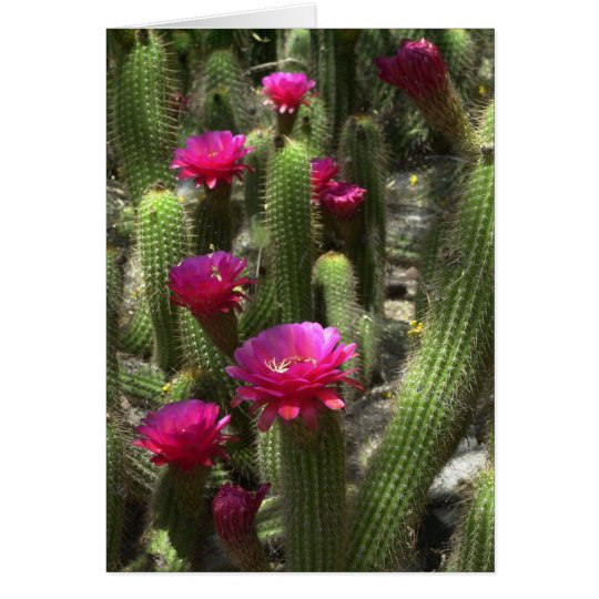 Pink Torch Cactus Card