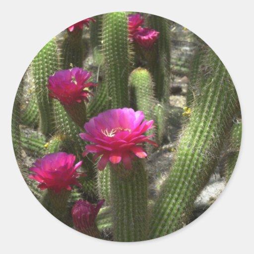 Pink Torch Cactus Round Sticker