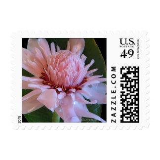 Pink Torch Ginger Small Wedding Postage