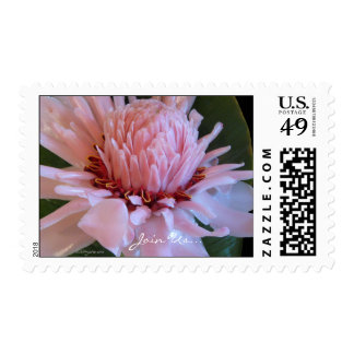 Pink Torch Ginger Tropical  Wedding Postage