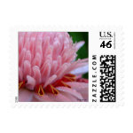 Pink Torch Ginger Wedding Mailing Stamps stamp