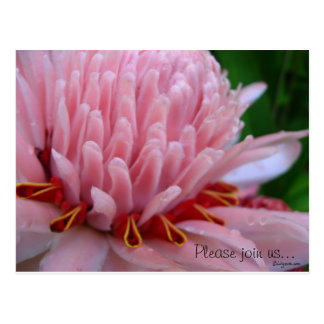 Pink Torch Ginger Wedding Save the Date Cards