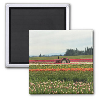 Pink Tractor in Tulip Field Magnet